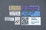 3048020 Oxyporus flavicornis ST labels IN