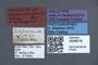 3048018 Oxyporus bierigi HT labels IN