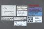 3048022 Oxyporus proximus ST labels IN
