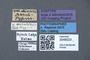 3048023 Oxyporus rufus var minarzi ST labels IN