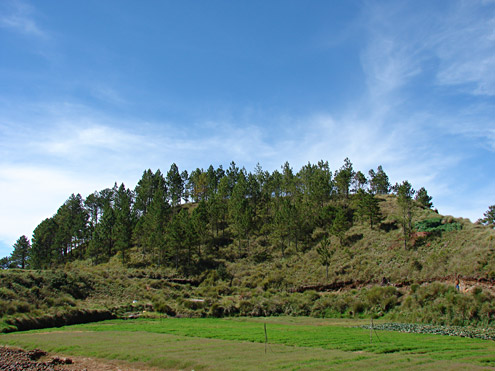 When hillsides from 900-2500m adjacent to cropland are burned, pine forest with grassy understory is often present, providing habitat for exotic pest rats. Mt. Pulag, 2335m, Benguet Province, Luzon. [Copyright] The Field Museum