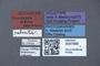 3047988 Pseudopsis afra HT labels IN