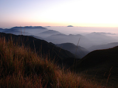 The top of Mt. Pulag is covered with grassland composed of dwarf bamboo and grasses. Fires sweep through the area periodically, preventing mossy forest from regenerating. Mt. Pulag, 2800m, Benguet Province, Luzon. (c) The Field Museum