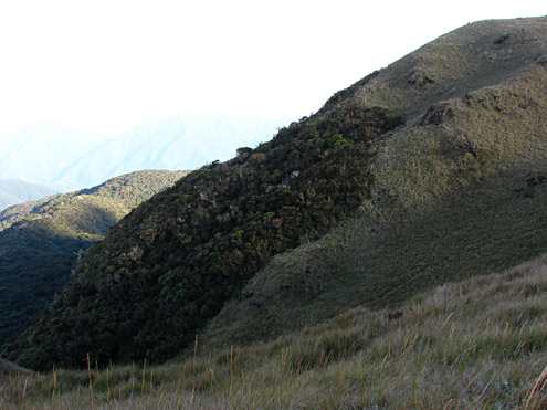 Fires in grassland on Mt. Pulag burn up to the edge of mossy forest leaving a sharp boundary between the two types of vegetation. Mt. Pulag, 2700m, Benguet Province, Luzon. (c) The Field Museum