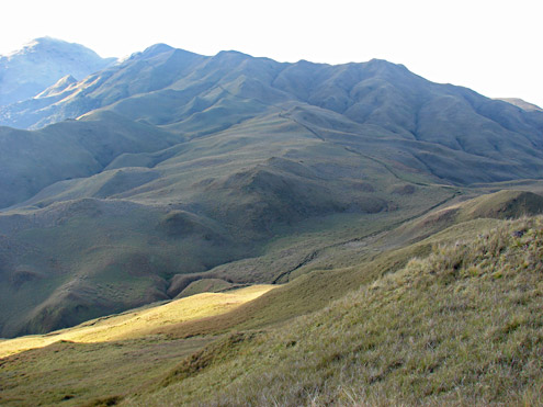 Open grassland that is maintained by fire covers the entire peak of Mt. Pulag, Benguet Province, Luzon. [Copyright] The Field Museum