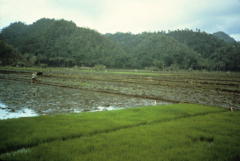 Areas where logging has been controlled and the forest has regenerated often produce abundant water for irrigation. Chocolate Hills, near Bilar, Bohol Island. (c) The Field Museum