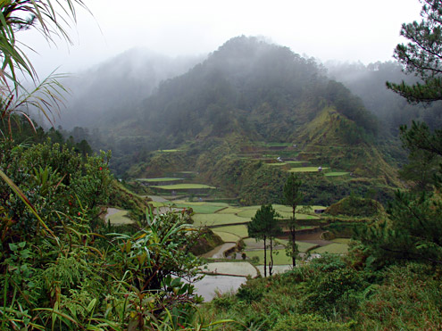 Traditional cultures in the Central Cordillera of Luzon protect their watershed areas to maintain stable water sources for rice cultivation. Near Barlig, Mountain Province, Luzon. (c) The Field Museum