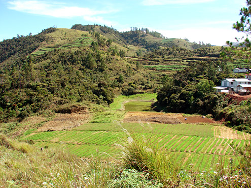 Where high-value vegetable crops are grown in the Central Cordillera, traditional land management practices are being lost, sometimes causing problems with erosion and flooding. Mt. Pulag, Benguet Province, Luzon. [Copyright] The Field Museum
