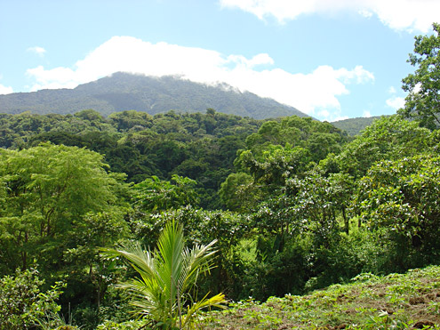 When logged-over forest is allowed to regenerate, it often produces well-functioning watersheds within 25 years. Mt. Banahaw, about 650m, Quezon Province, Luzon. (c) Field Museum of Natural History
