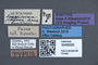 3048005 Scaphidium rufum ST labels IN