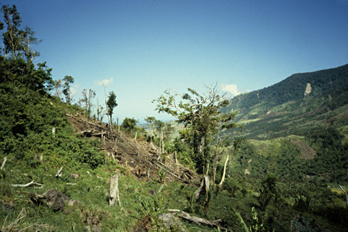 After logging has removed trees from steep hillsides, subsistence farmers often move in and begin planting crops. Mt. Konduko, Biliran Island. (c) The Field Museum