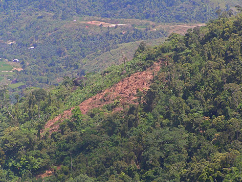 Hillsides that have been cleared for farming often are exposed to heavy rains, resulting in heavy erosion. Mt. Palali, Nueva Vizcaya Province, Luzon. (c) The Field Museum