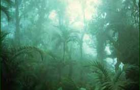 Mossy Forest, Philippines  [Copyright] Field Museum of Natural History - CC BY-NC