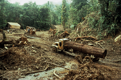 Large-scale logging in the Philippines has often been poorly managed, causing damage to streams and leaving mountainsides exposed to erosion. Mt. Busa, Sarangani Province, Mindanao. Photograph by R. Brown. (c) The Field Museum