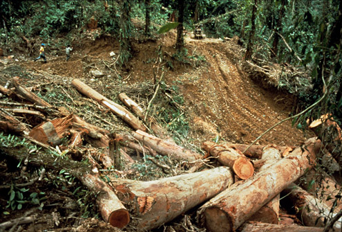 Inefficient commercial logging wastes a great deal of lumber and leaves steep mountainsides exposed to flooding and severe erosion. Mt. Busa, Sarangani Province, Mindanao. Photograph by R. Brown [Copyright] The Field Museum
