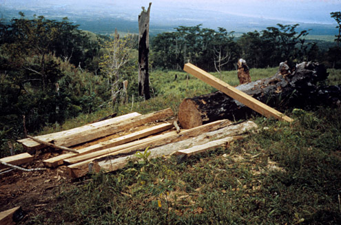 After commercial logging has ceased, small-scale logging often begins, using handsaws or small chainsaws, preventing regeneration of the forest. Mt. Isarog, Camarines Sur Province, Luzon. [Copyright] The Field Museum
