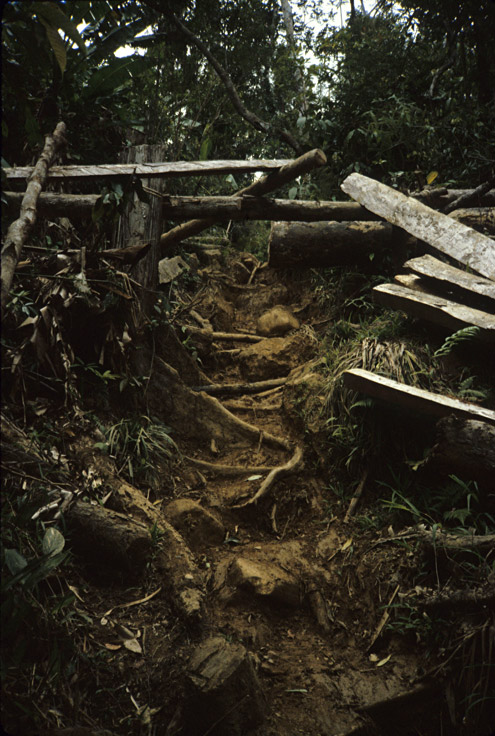 Dragging out lumber behind carabao often creates deep trenches that then become heavily eroded. Mt. Konduko, Biliran Island. [Copyright] The Field Museum