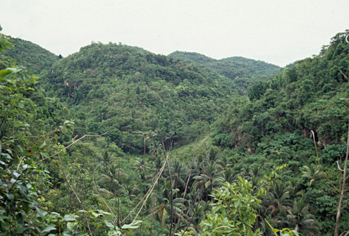 Even on Cebu, second-growth forest can regenerate, providing habitat for threatened species of mammals and birds. Balamban, Cebu Island. (c) The Field Museum