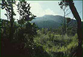 Mount Isarog, an extinct volcano, is the site of one of the oldest national parks in the Philippines. [Copyright] Field Museum of Natural History - CC BY-NC