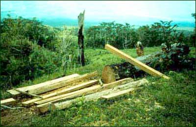 Illegal logging and burning have gradually destroyed the rain forest on the lower slopes of Mt. Isarog, disrupting the watershed. [Copyright] Field Museum of Natural History - CC BY-NC