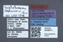 3048011 Scaphobaeocera stephensoni HT labels IN