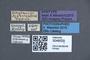 3048029 Siagonium mjobergi ST labels IN