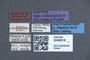 3048016 Siagonium nobile ST labels IN