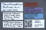 3048012 Termitoscaphium kistneri HT labels IN