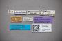 3048489 Bledius semiopacus ST labels IN