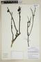 Bulnesia retama (Gillies ex Hook. & Arn.) Griseb., Peru, M. Weigend 97/633, F