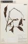 Macrolobium angustifolium (Benth.) R. S. Cowan, Peru, A. H. Gentry 25269, F