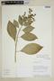 Burmeistera brachyandra image