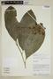 Centropogon alsophilus image