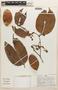 Macrolobium angustifolium (Benth.) R. S. Cowan, Peru, A. H. Gentry 26208, F
