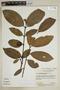 Garcinia brasiliensis Mart., Brazil, N. Silva 4910, F