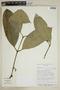 Garcinia madruno (Kunth) Hammel, Bolivia, I. G. Vargas C. 1178, F