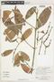 Garcinia brasiliensis Mart., Bolivia, E. Meneces 58, F
