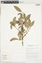 Garcinia gardneriana (Planch. & Triana) Zappi, Brazil, H. C. de Lima 198, F