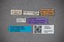 3048532 Oxytelus myrmecophilus ST labels IN
