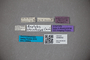 3048542 Oxytelus striaticeps ST labels IN
