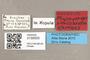 3130503 Physoconops nigroclavatus HT labels IN