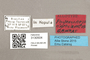 3130504 Physoconops nigroclavatus AT labels IN