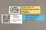 3130509 Pseudophysocephala barbata PT labels IN
