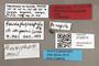 3130510 Pseudophysocephala meii HT AT labels IN