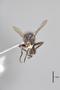 3130513 Robertsonomyia painteri PT h IN
