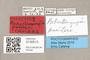 3130513 Robertsonomyia painteri PT labels IN