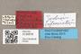 3130516 Zodion bifasciatum HT labels IN