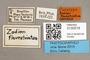 3130518 Zodion flavostriatum PT labels IN