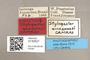 3130527 Stylogaster amazonasi PT labels IN