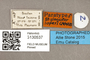3130537 Stylogaster lopesi PT labels IN